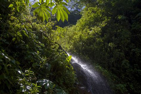 Tropical deforestation leads to rise in temperature