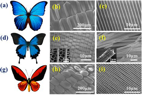 Polymers | Free Full-Text | Chitin-Based Anisotropic